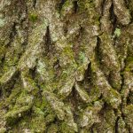 Oak Bark Angular Pattern