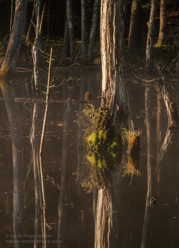 Spring morning light, beaver pond