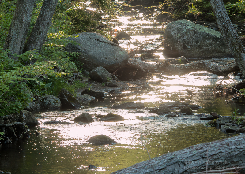 Spring River of Gold