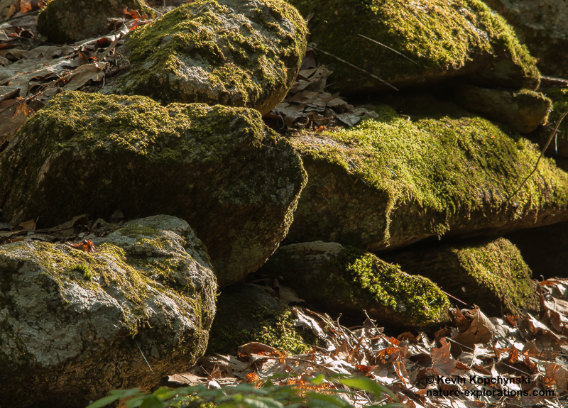 Stone wall in spring morning light