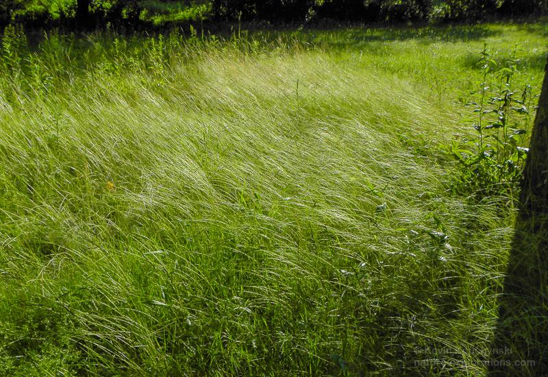 Sunlit Grass