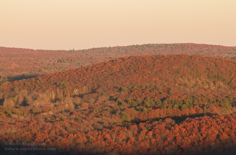 November Foliage in Late Afternoon Light I