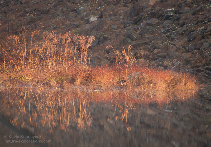 November Pond Reflections II