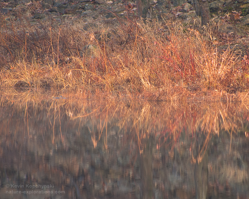 November Pond Reflections I