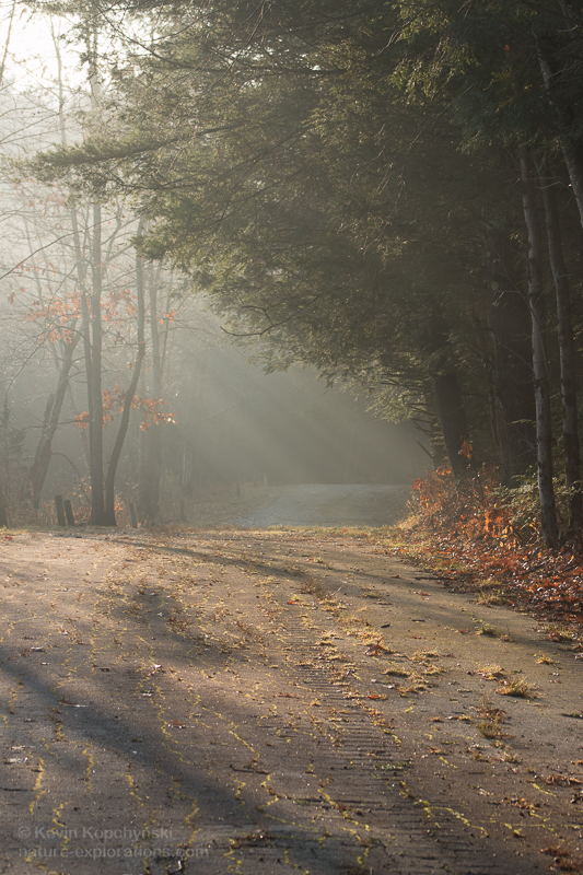 Old Road in November Mist
