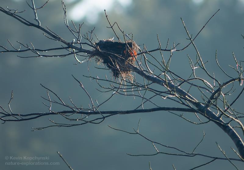 Nest in November