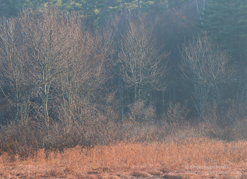 Trees and Marsh in November Light