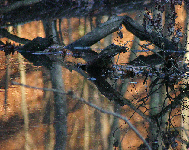 Autumn Reflections in Woodland Pool