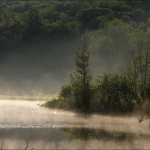 Pond in Summer Morning Mist